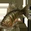 Silverside Perch